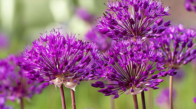 Gartenpflege Bepflanzungen vom Profi